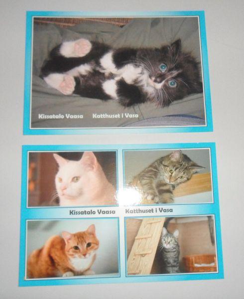 kissatalon kortteja
